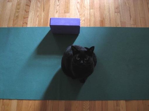 Yogacat