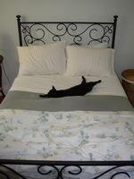 Catsbed