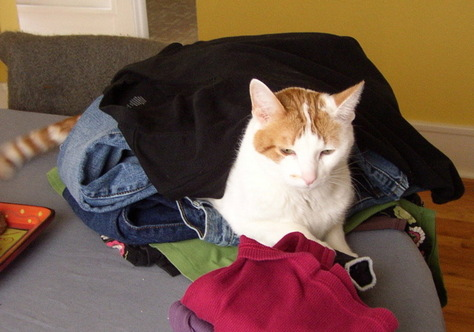 Laundryoncat